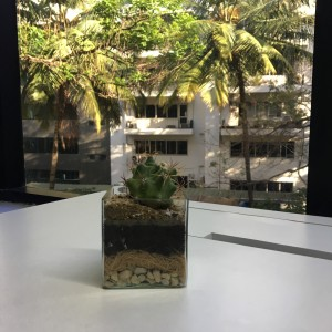 Terrarium with depth